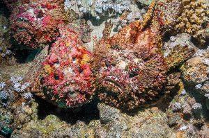 تولیدچسب ضدآب بااستفاده ازصخره ماهی